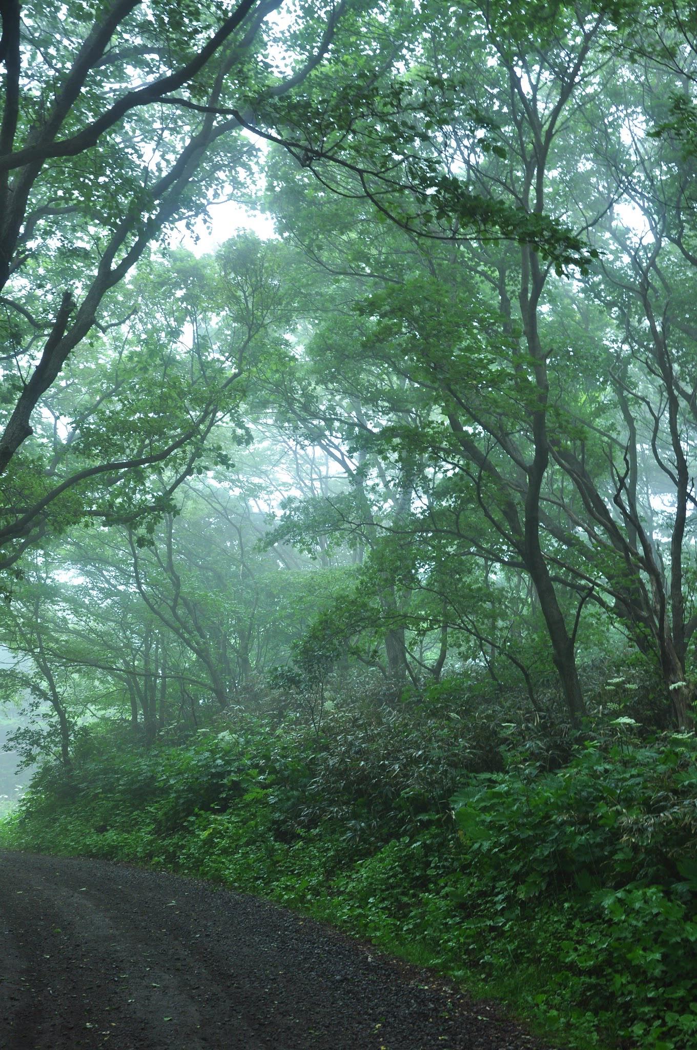 自然、森の中、自然に生きる、野生